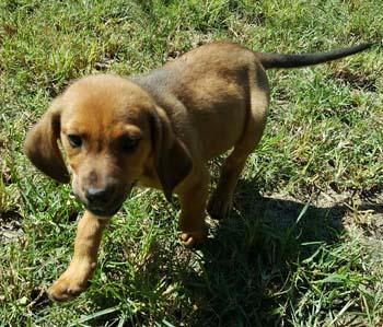 Etosha Rescue And Adoption Center